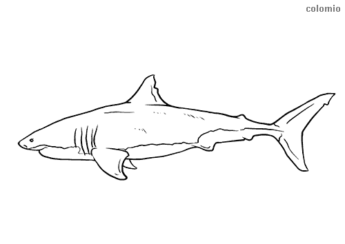 Realistic shark profile coloring page