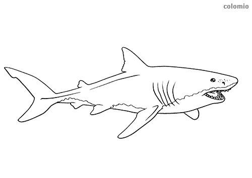 Shark with open mouth coloring page