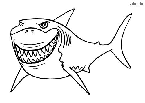 Dibujo de Tiburón enseñando los dientes para colorear