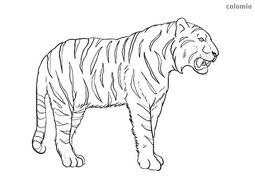Dibujo de Tigre rugiendo para colorear