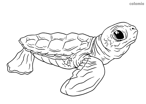Turtles Coloring Pages Free Printable Turtle Coloring Sheets