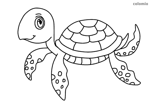 Simple turtle coloring page
