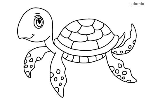 Dibujo de Tortuga sencilla para colorear