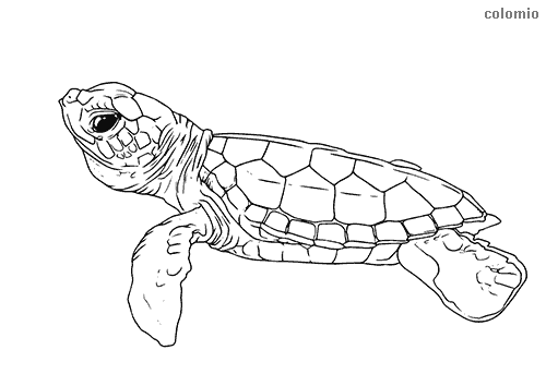 - Zoo Animals Coloring Pages » Free & Printable » Zoo Coloring Sheets