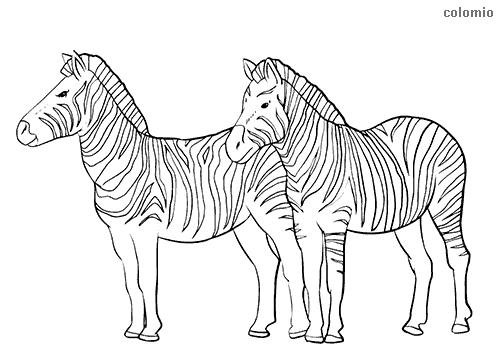 Dibujo de Pareja de cebras para colorear