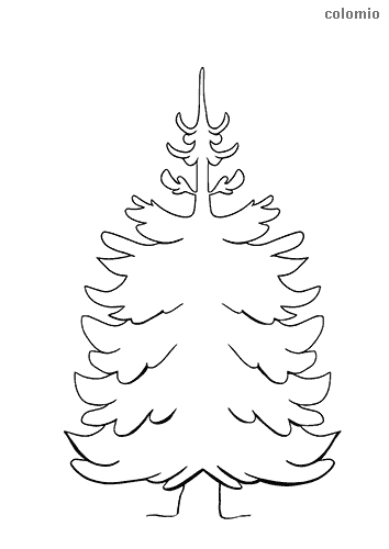 Fir tree coloring page