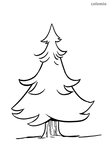 Fir with big trunk coloring page