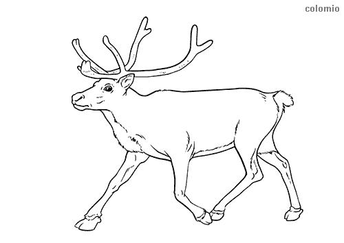 Dibujo de Reno trotando para colorear