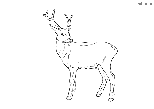 Reindeer with antlers coloring sheet
