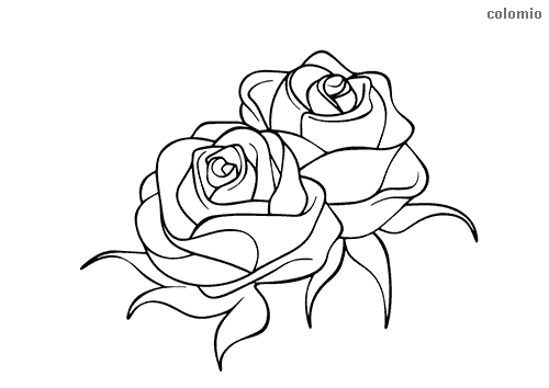Heads of a pair of roses coloring page