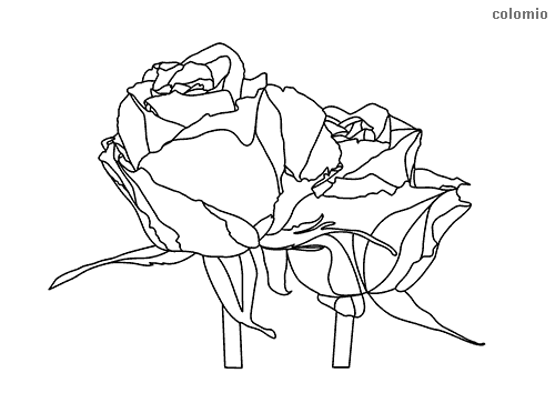 Pair of roses coloring page