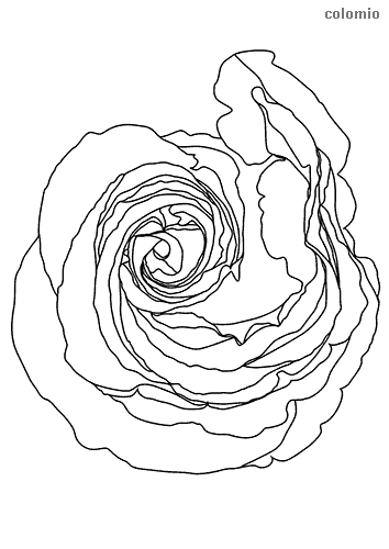 Rose top view coloring sheet