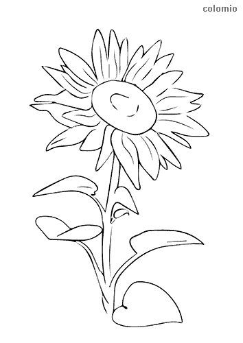 Simple sunflower coloring page