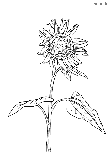 Nature Coloring Pages Free Printable Nature Coloring Sheets