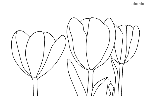 Bundle of tulips coloring sheet