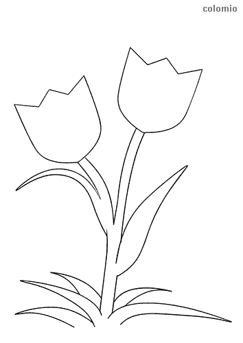 Simple pair of tulips coloring page