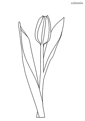 Tulip with stem coloring sheet