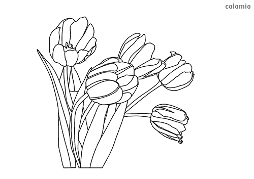 Tulips with stem coloring page