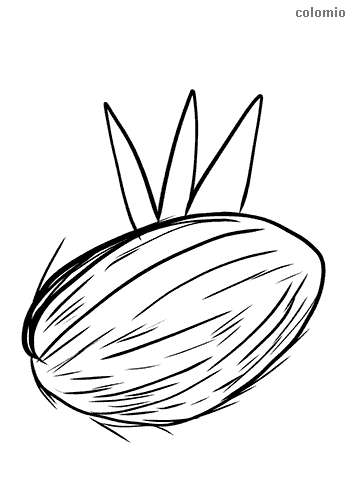 coconut with leaf coloring page
