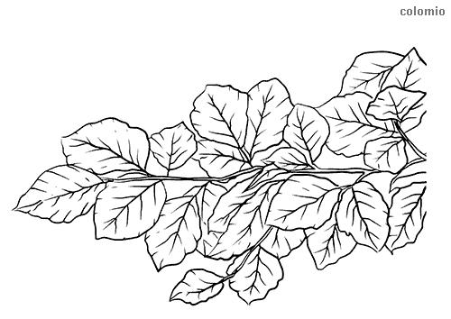 Dibujo de Rama con hojas para colorear