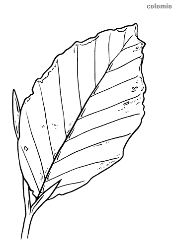 Crab apple leaf coloring page