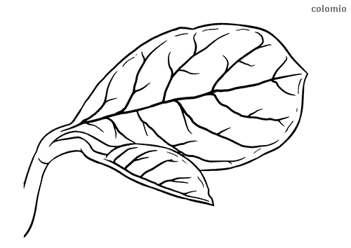 Jackfruit leaf coloring page