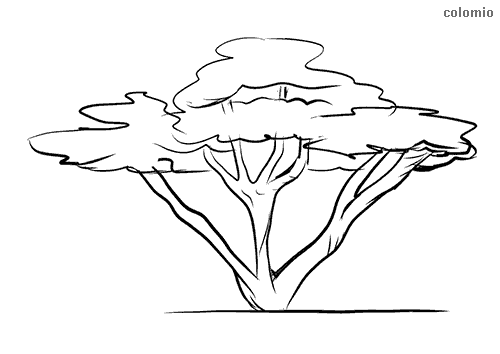 Multi-stemmed tree coloring page
