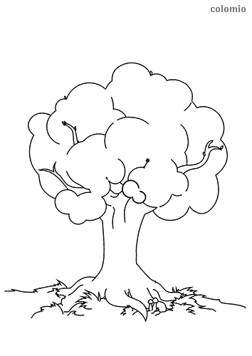 Tree with big treetop coloring page