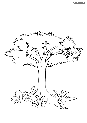 Tree with shrubbery coloring page