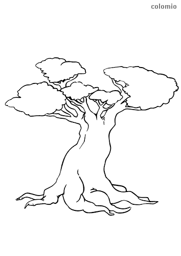 Tree with thick trunk coloring page