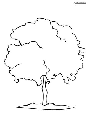 Dibujo de Árbol con tronco estrecho para colorear